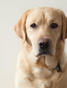 Hondenfotograaf Leiden – 52 weeks Project – Week 4