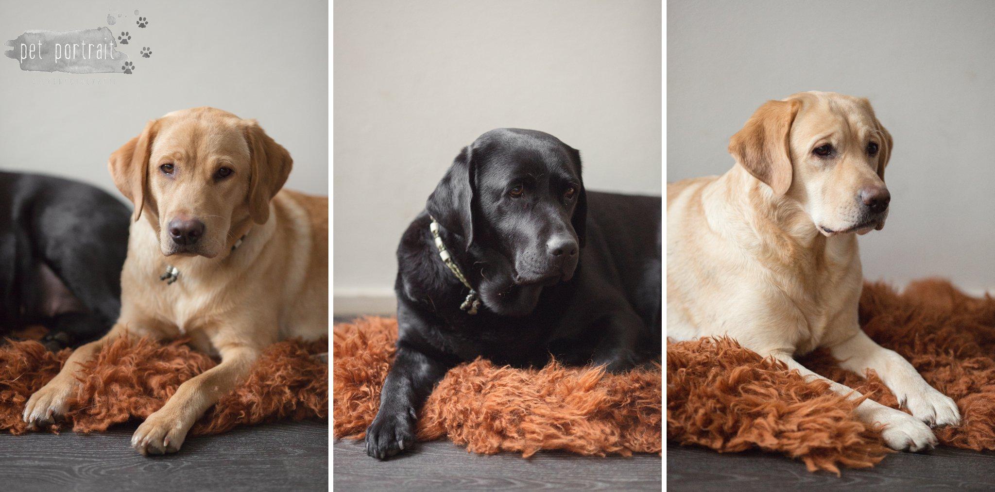 Hondenfotograaf Leiden – 52 weeks Project – Week 5