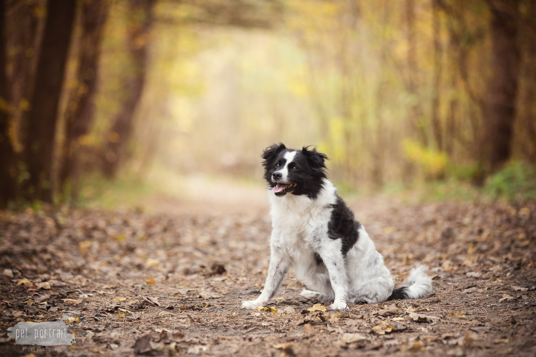 Hondenfotograaf Wassenaar - Fotoshoot in het bos