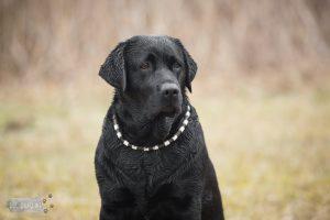 Hondenfotograaf Bruinisse – 52 weeks Project – Week 12