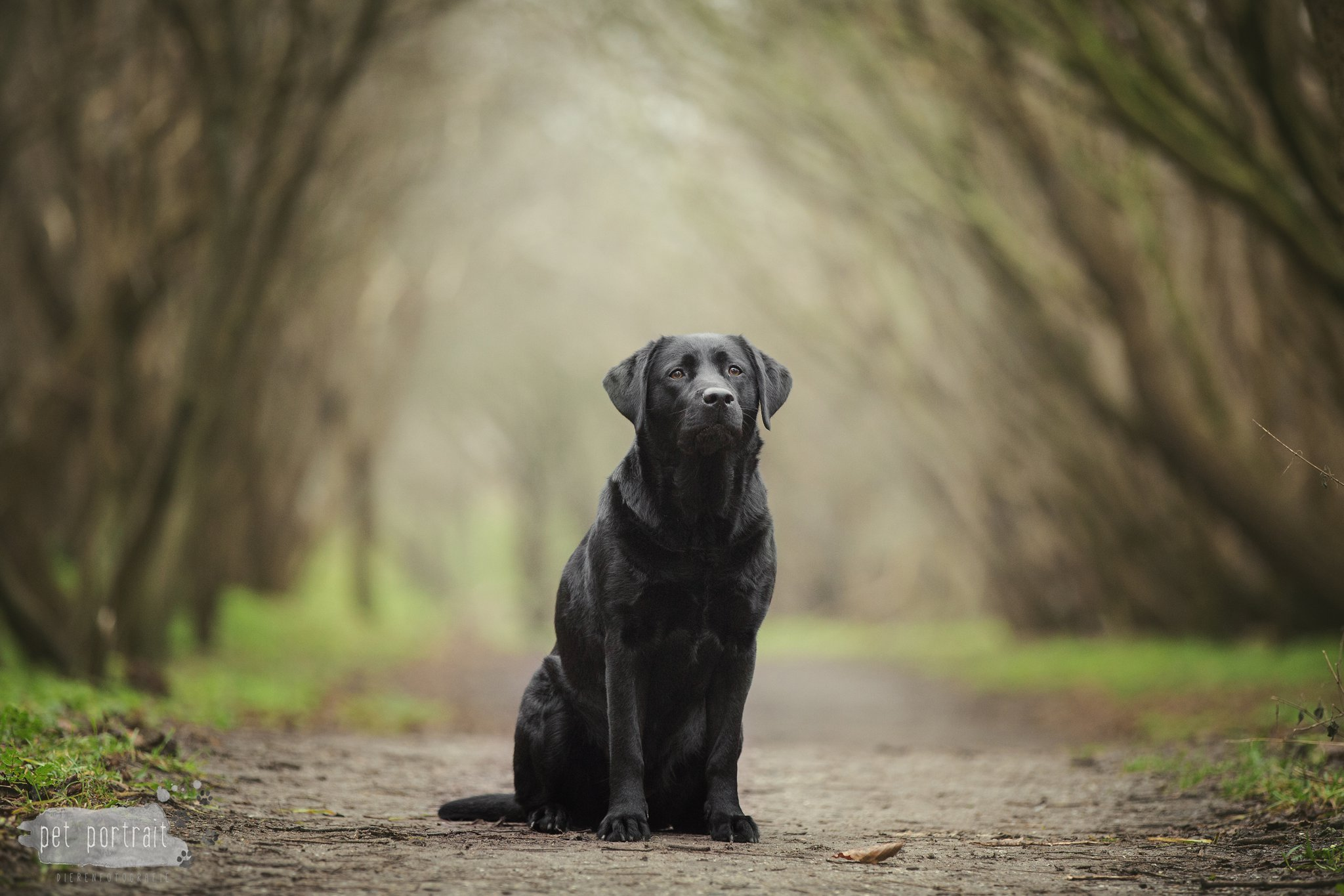 Hondenfotograaf Noordwijk - Dier en Baasje fotoshoot in de duinen