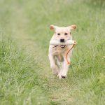 Hondenfotograaf Dinteloord – 52 weeks Project – Week 18
