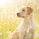 Hondenfotograaf Goeree-Overflakkee - 52 weeks Project - Week 23