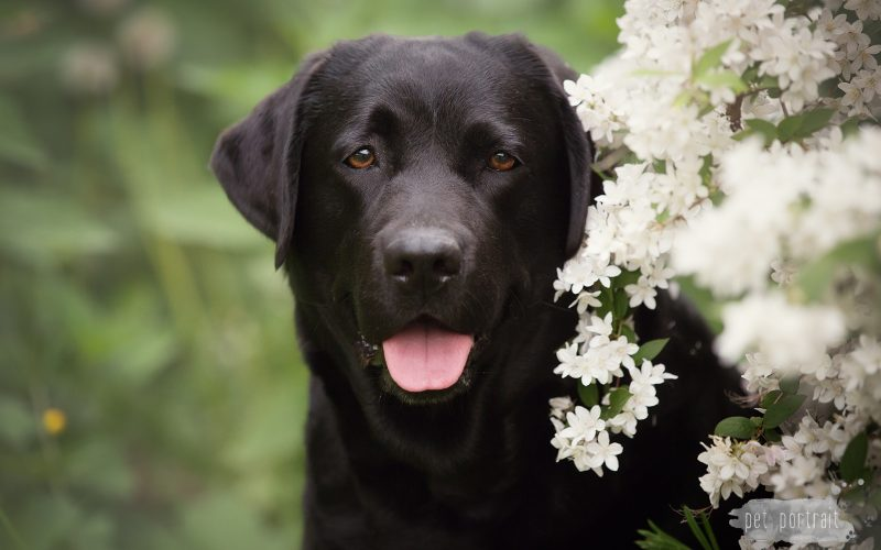 Pet Portrait Dierenfotografie wordt Dog Portrait Hondenfotografie