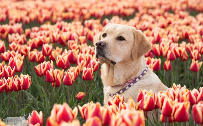 Hondenfotograaf Goeree-Overflakkee – 52 weeks Project – Week 16