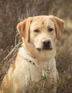 Hondenfotograaf Loonse en Drunense duinen – 52 weeks Project – Week 15