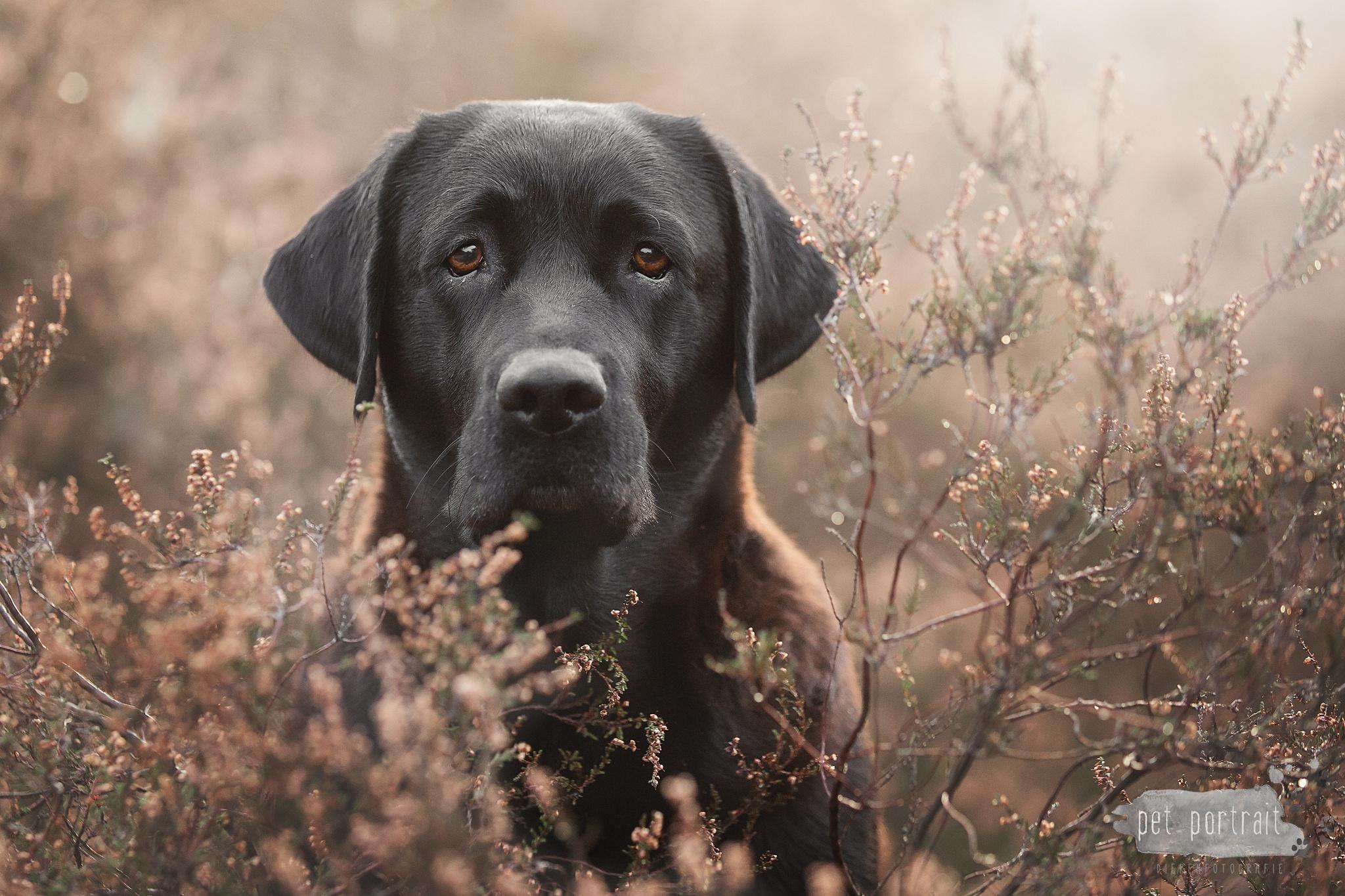 Workshop Dierenfotografie bij Pet Portrait