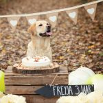 Verjaardagsfotoshoot Labrador Freyja - Doggy Birthday Party