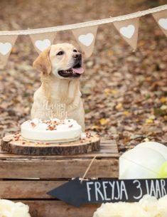 Verjaardagsfotoshoot Labrador Freyja - Doggy Birthday Party