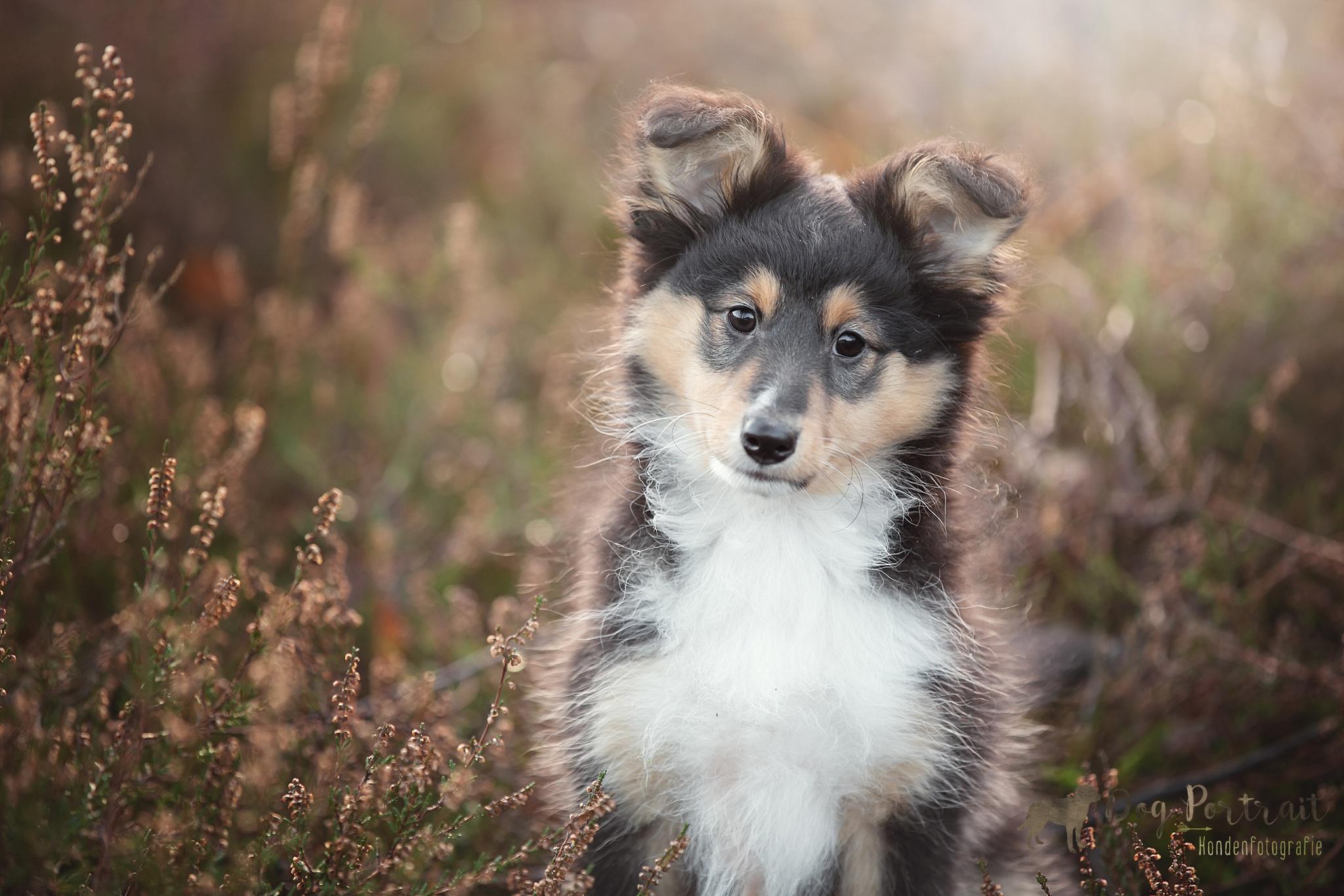 Hondenfotograaf Bergen op Zoom
