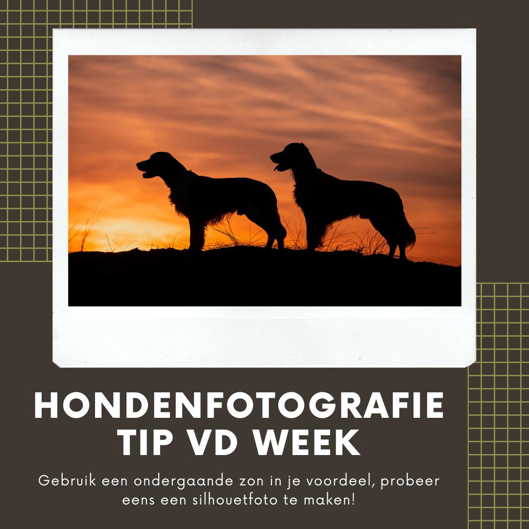 Hondenfotografie Tip van de Week - Week 9 2020