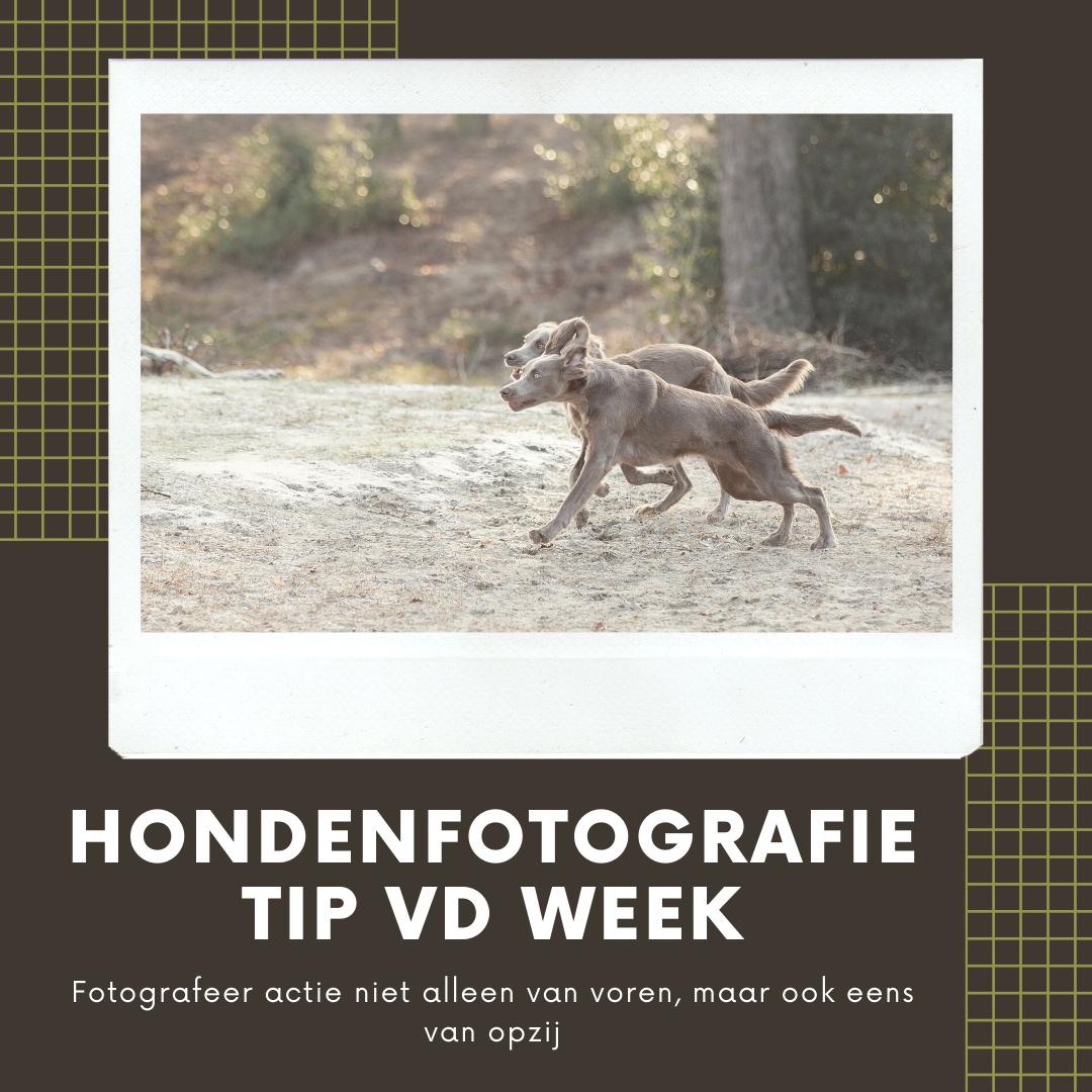 Hondenfotografie Tip van de Week - Week 18 2020