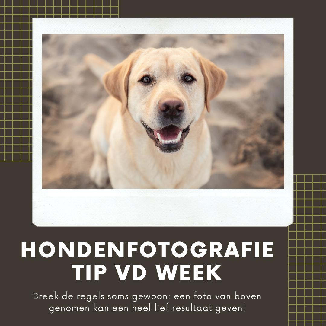 Hondenfotografie Tip van de Week - Week 10 2020