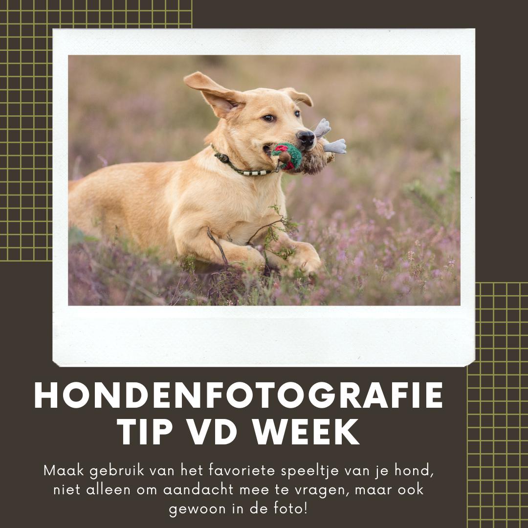 Hondenfotografie Tip van de Week - Week 12 2020