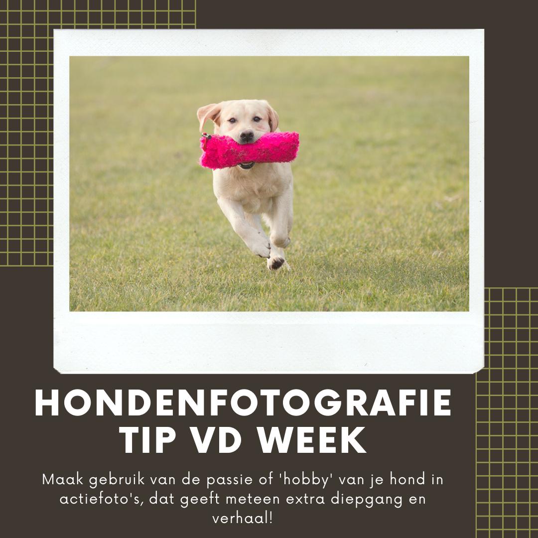 Hondenfotografie Tip van de Week - Week 13 2020