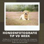 Hondenfotografie Tip van de Week - Week 15 2020