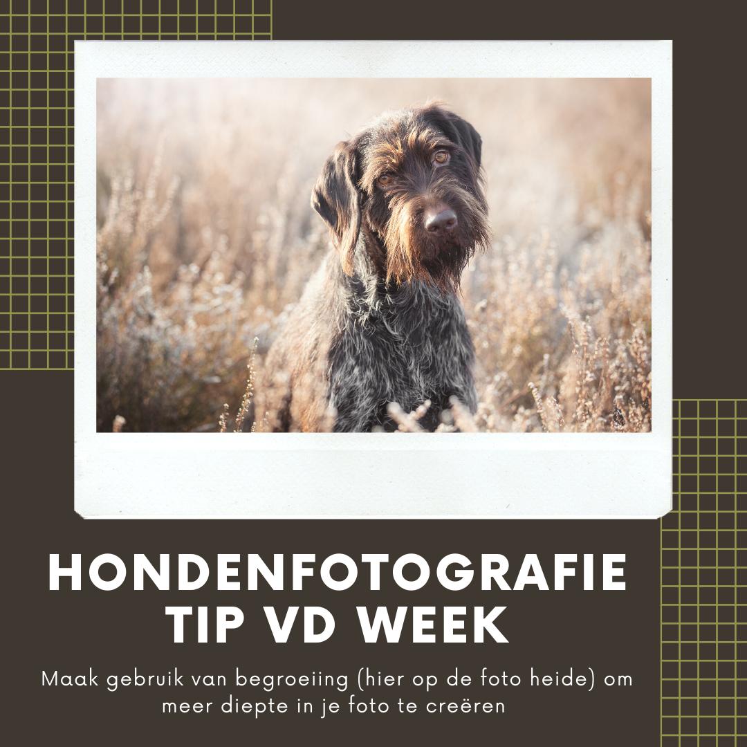 Hondenfotografie Tip van de Week - Week 17 2020