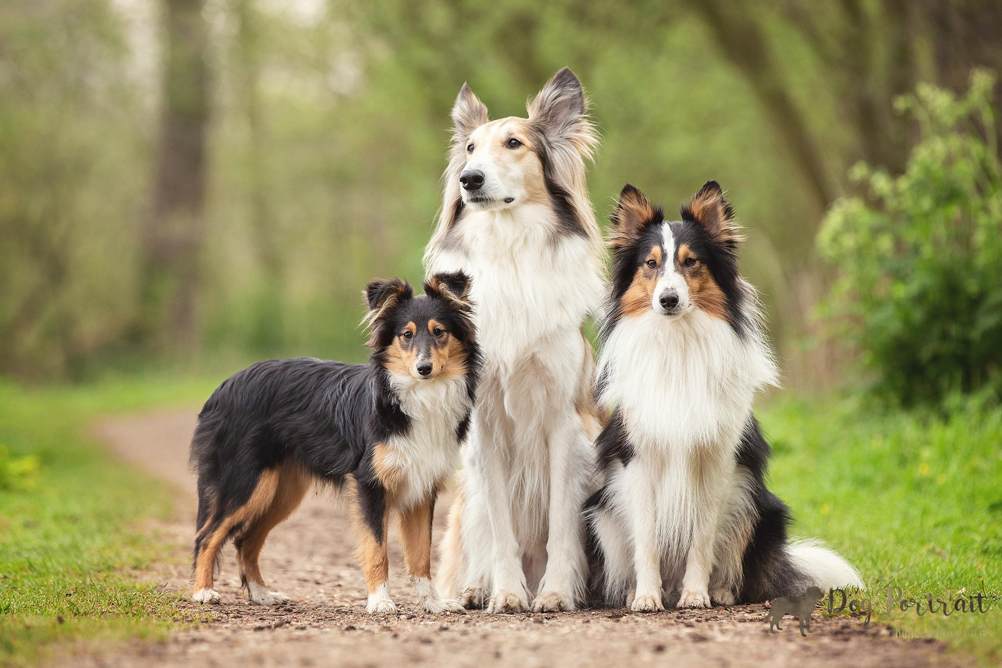 Hondenfotograaf Waddinxveen - Groei mee serie Puk
