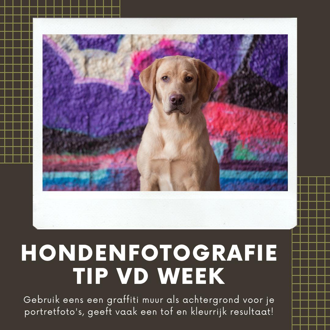Hondenfotografie Tip van de Week – Week 22 2020