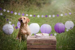 Hondenfotografie Ooltgensplaat - Doggy Birthday Party Labrador Idunn