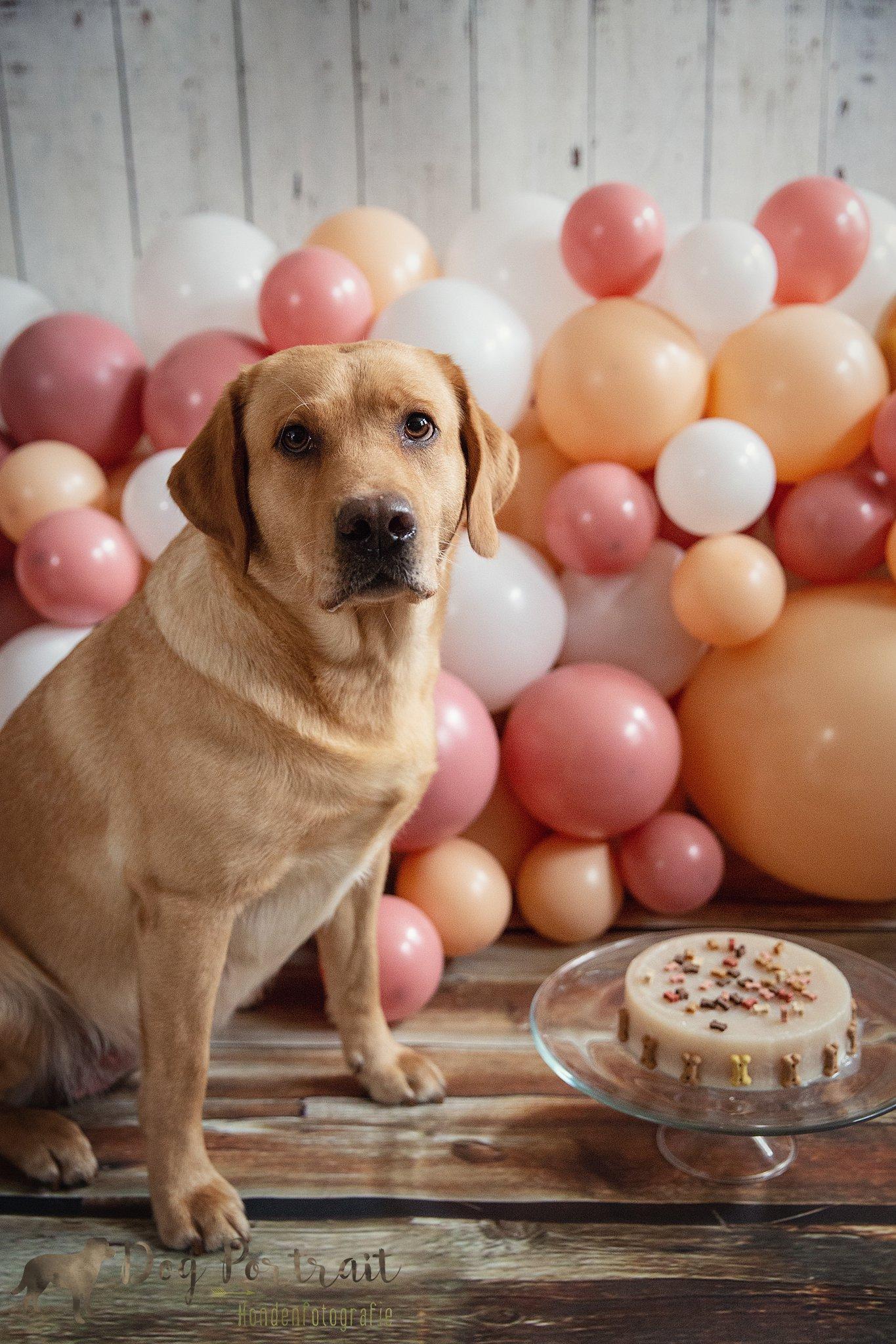 Hondenfotografie Ooltgensplaat - Hondenverjaardag Skadi