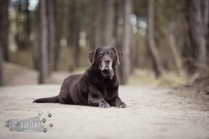 Hondenfotograaf-Wassenaar-Labrador-Apple-3