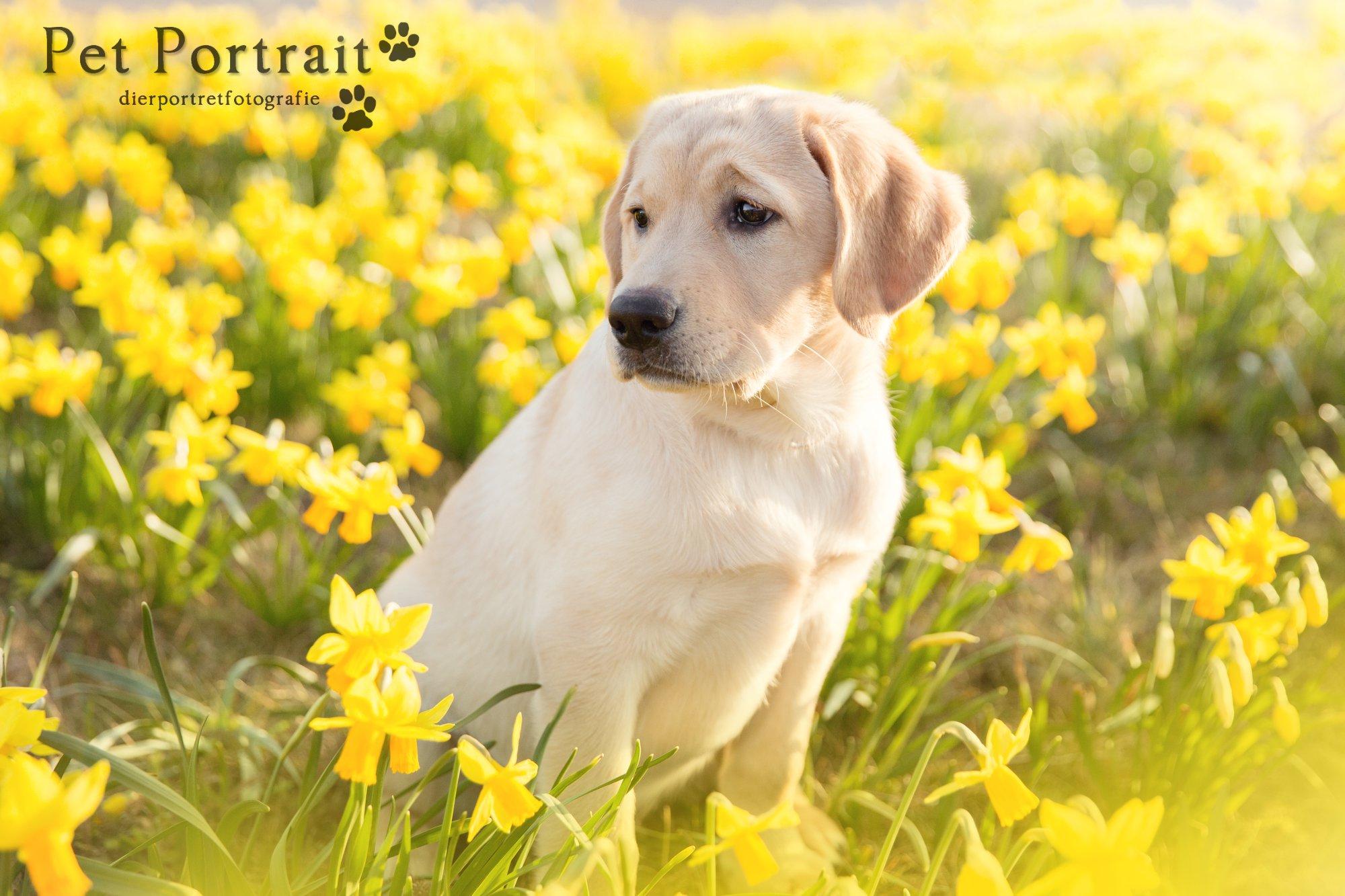 Hondenfotograaf Leiden - Freyja's tweede maand alleen