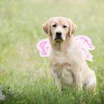 Hondenfotograaf Leiden - Labradors Juno en Freyja - Maand juni