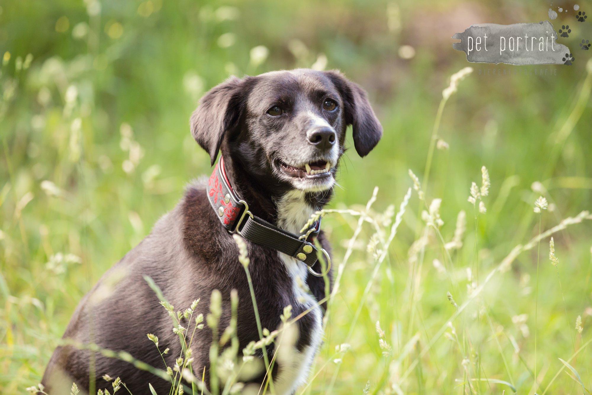 Hondenfotograaf Heemstede - Fotoshoot in het bos