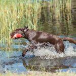 Dierenfotografie Tip - Water gebruiken