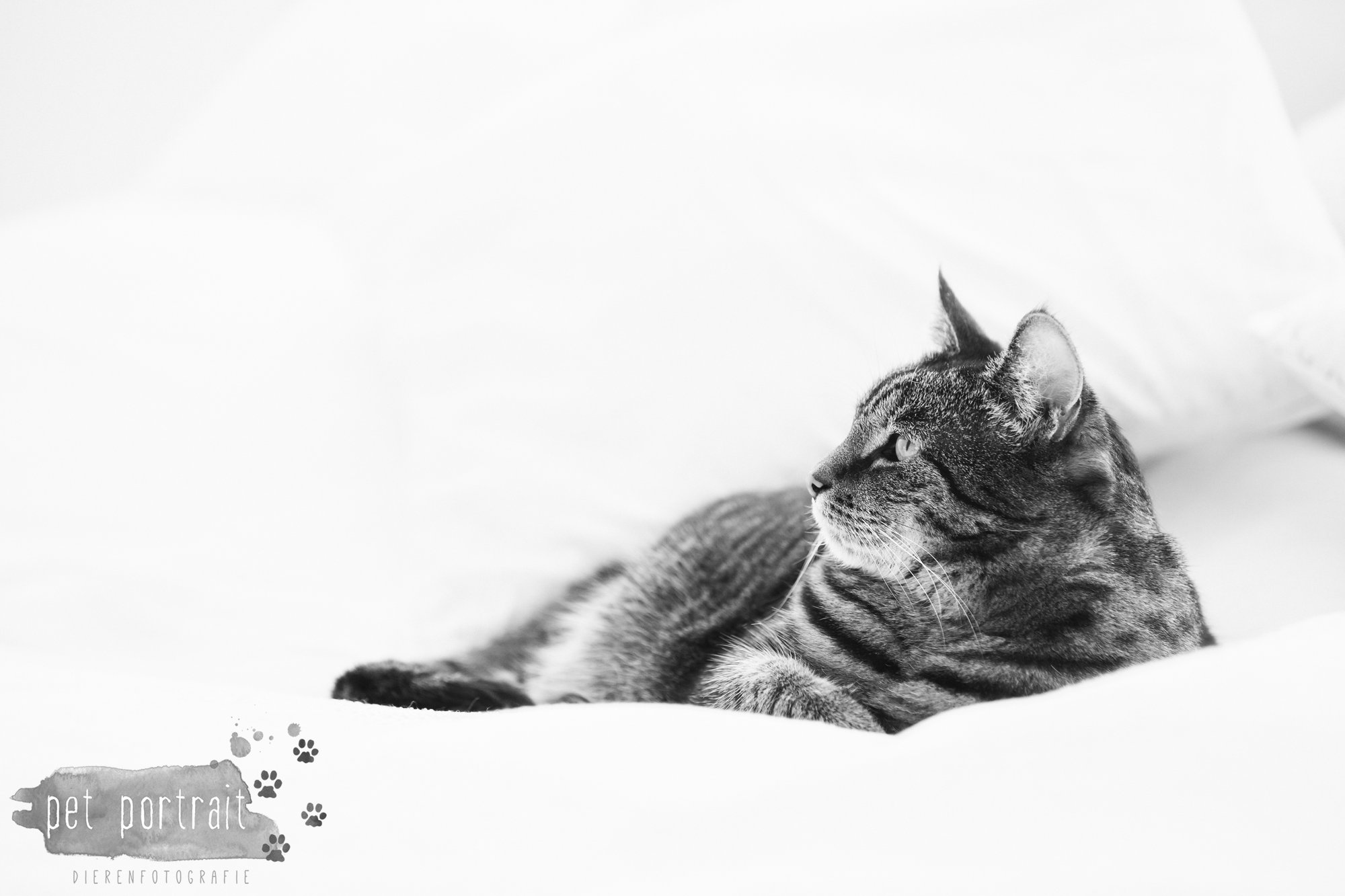 Dierenfotografie Tip - Negatieve ruimte