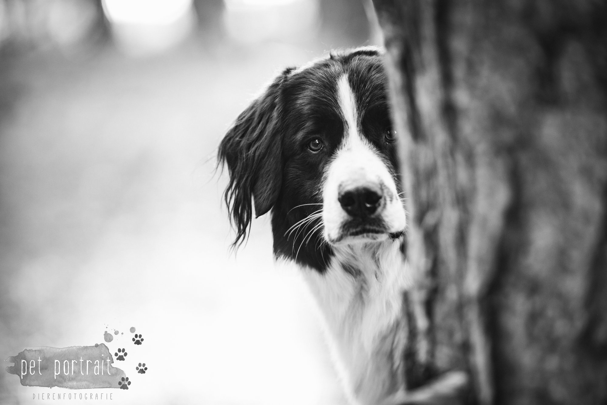 Hondenfotograaf Wassenaar - Stabij kruising Jurre