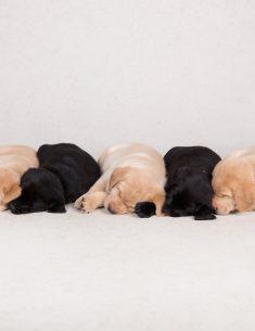 Hondenfotograaf Hillegom - Nestfotoshoot pups Juno en Shai