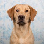 Heb je dit blog gevonden door te zoeken op Hondenfotograaf Leiden of Fotoshoot hond? Ben je benieuwd geworden naar meer van mijn werk, of wil je ook een fotoshoot boeken voor je hond? Bekijk dan mijn Portfolio Hondenfotografie, of check de Informatiepagina over Beloved Dier en Baasje fotoshoots voor meer info over tarieven en mijn werkwijze! Hondenfotograaf Leiden – 52 weeks Project – Week 2