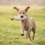Hondenfotograaf Leiden – 52 weeks Project – Week 7