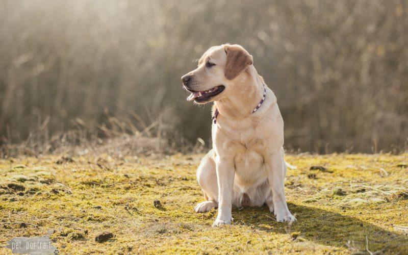 Hondenfotograaf Leiden – 52 weeks Project – Week 10