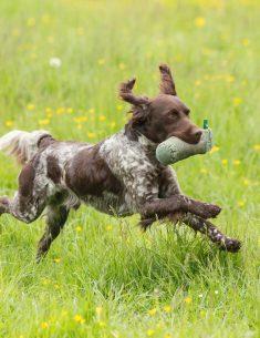 Hondenfotograaf Brabant - Working Test Staande Honden - Klundert - 19 mei 2018