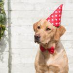 Hondenfotograaf Goeree-Overflakkee – 52 weeks Project – Week 14