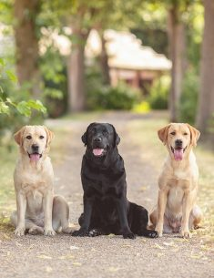 Hondenfotograaf Goeree-Overflakkee