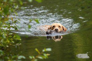 Hondenfotograaf Utrecht - Provinciale Jachthonden Proef gewest Utrecht 2018