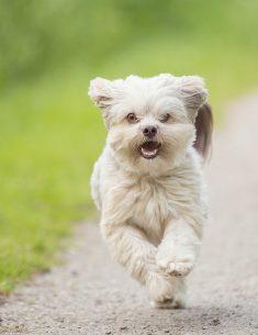 Hondenfotograaf Reeuwijk - Dier en Baasje shoot bij de Reeuwijkse Plassen