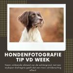 Hondenfotografie Tip van de Week - Week 11 2020