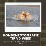 Hondenfotografie Tip van de Week - Week 14 2020