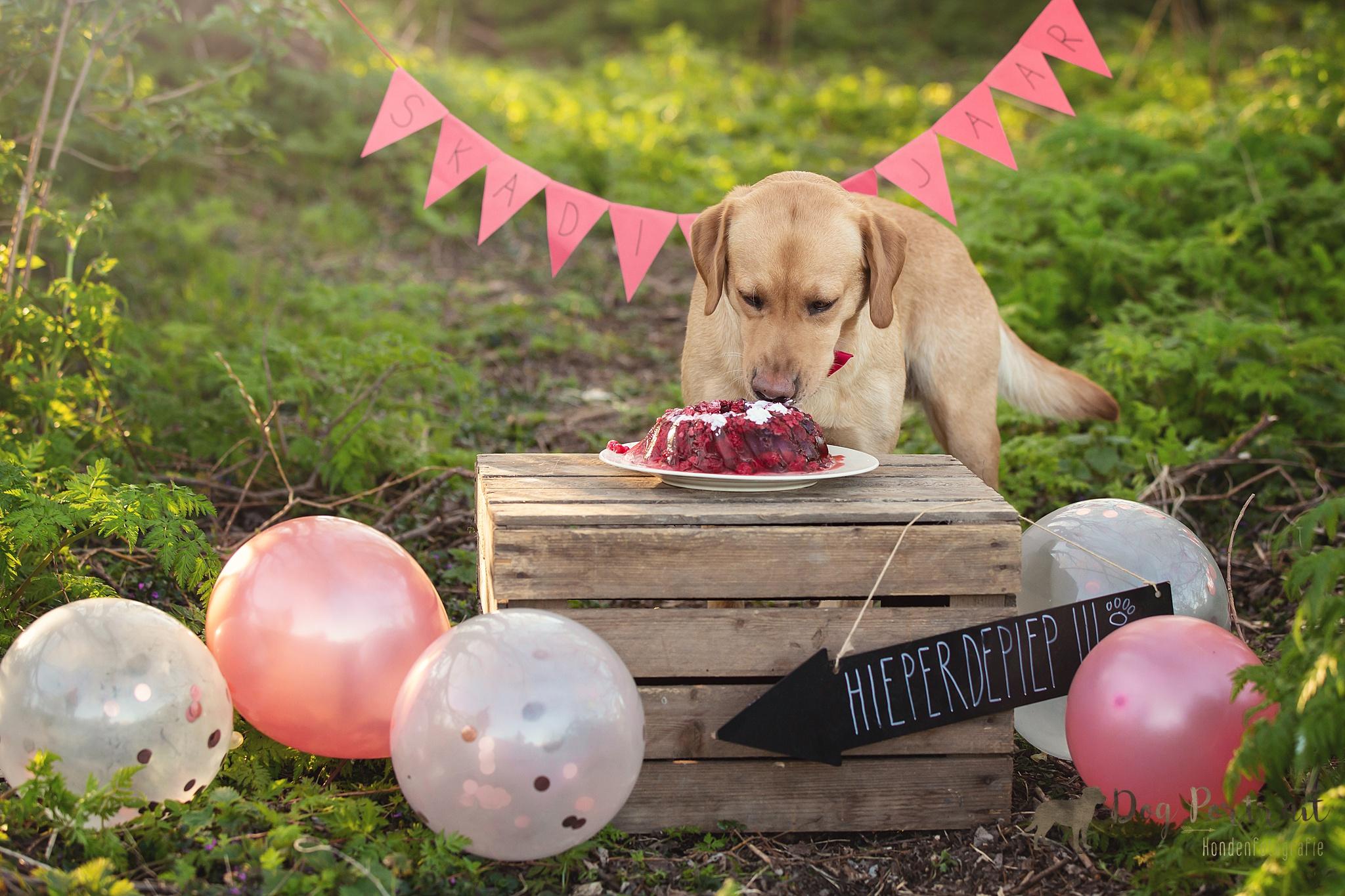 Hondenfotograaf Ooltgensplaat - Doggy Birthday Skadi