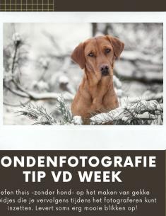 Hondenfotografie Tip van de Week – Week 20 2020