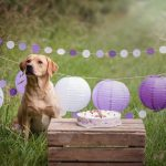 Hondenfotografie Ooltgensplaat - Doggy Birthday Party Labrador Idunn